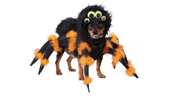 dog in orange and black spider costume