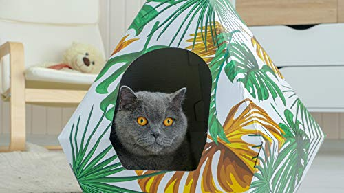 cat looking out of tropical cardboard den