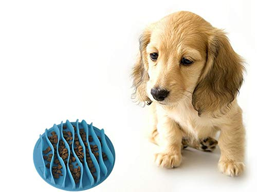 puppy looking at Detop slow feeder bowl