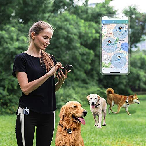 woman with three dogs using Petfon GPS tracker
