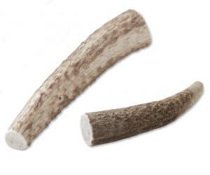 elk antler chews