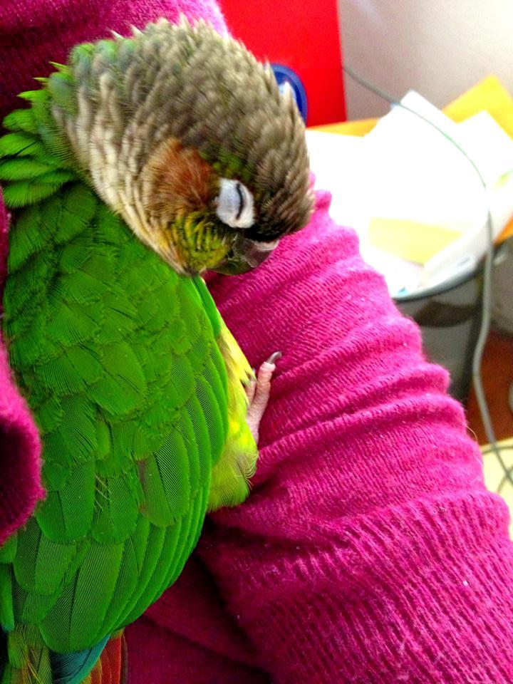 bird sleeping in elbow