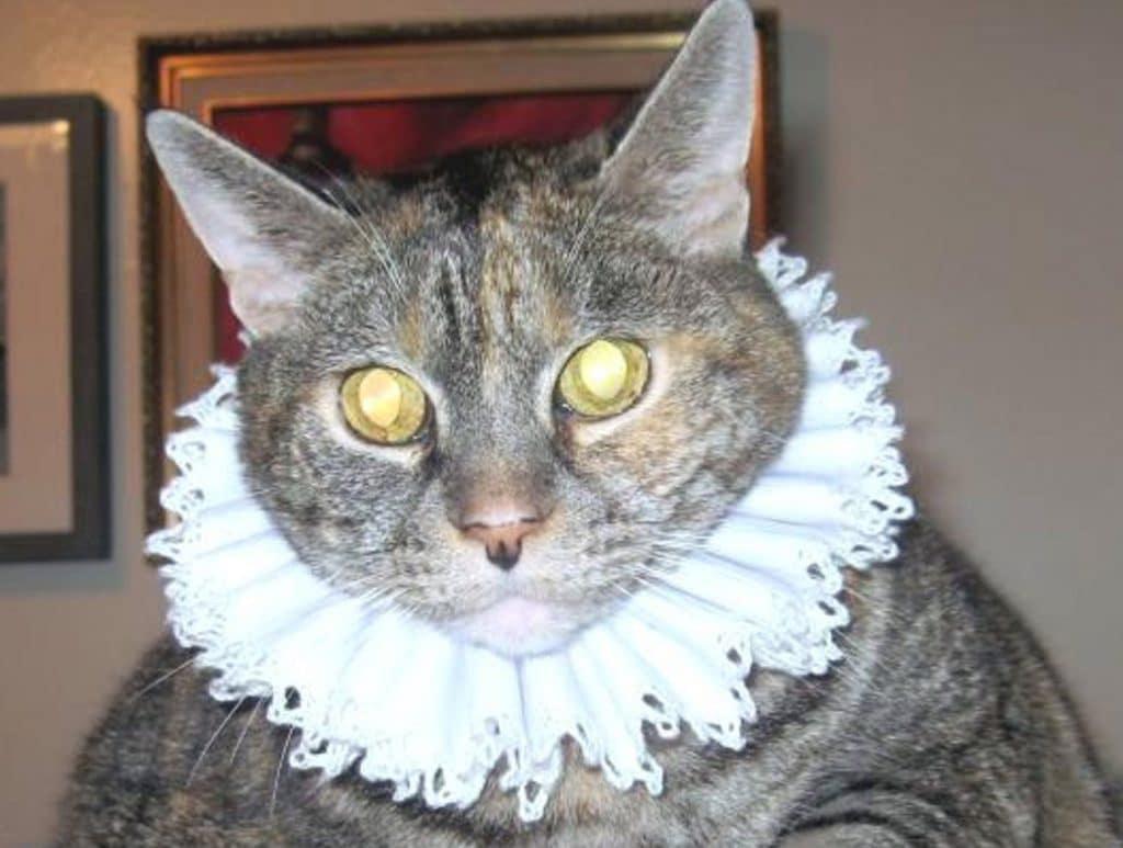 cat in ruffled Elizabethan collar