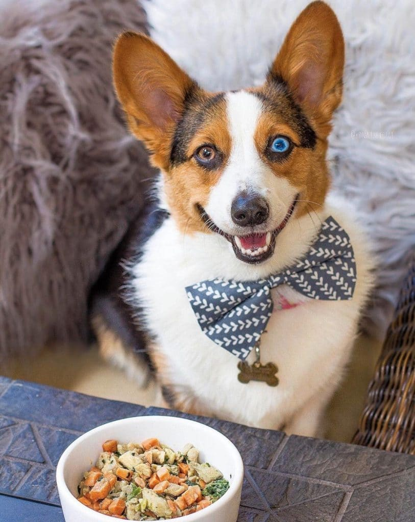 nom nom dog food with cute corgi pictured
