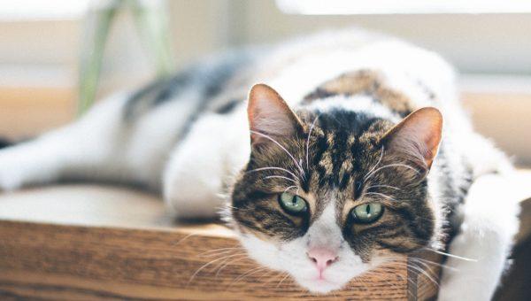 unsplash cat photo