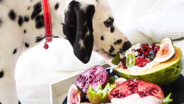 Dalmatian sniffing produce