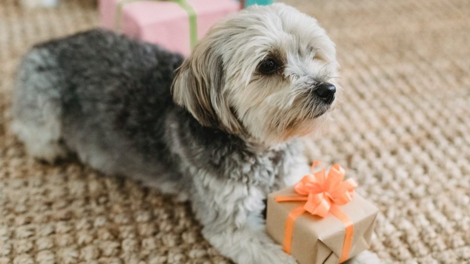 Dog Mom Gifts cover image