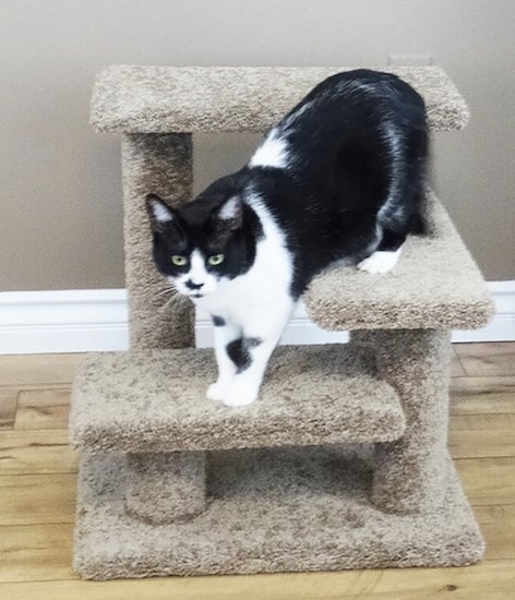 cat going down carpeted steps