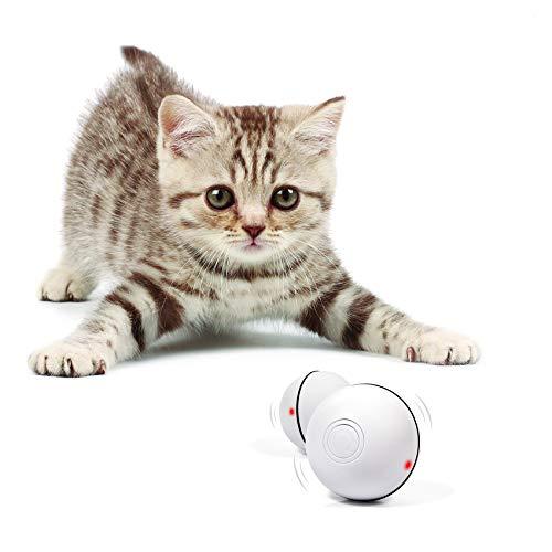kitten with Yofun ball