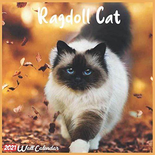 Ragdoll cat 18-month calendar