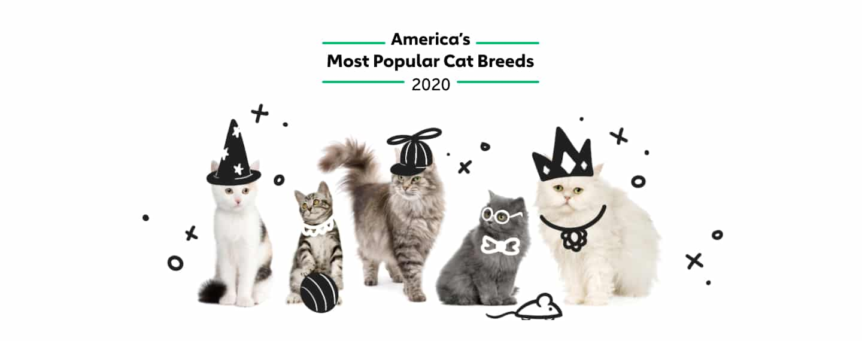 America S Most Popular Cat Breeds Rover Com
