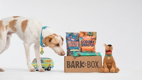 dog with Bark Box subscription box