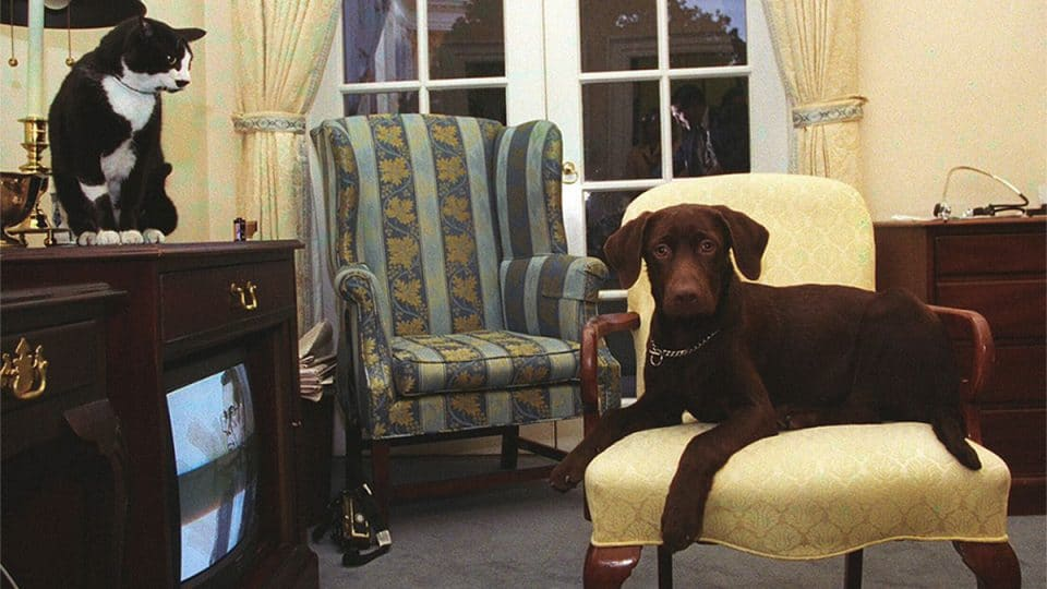 photo of Buddy the dog and Socks the cat in White House
