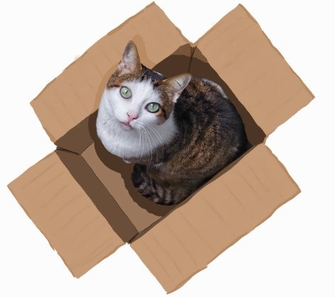 Female cat sitting in a box