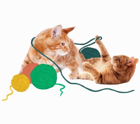 Two orange cats playing with yarn together