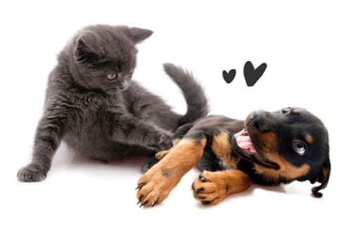 Dog + Cat