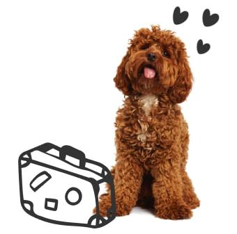 Dog + Suitcase