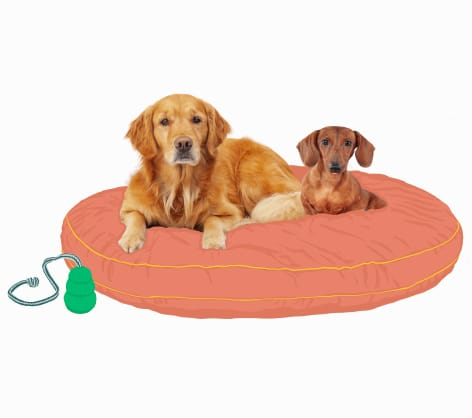 Two female dogs sitting on a big dog bed together
