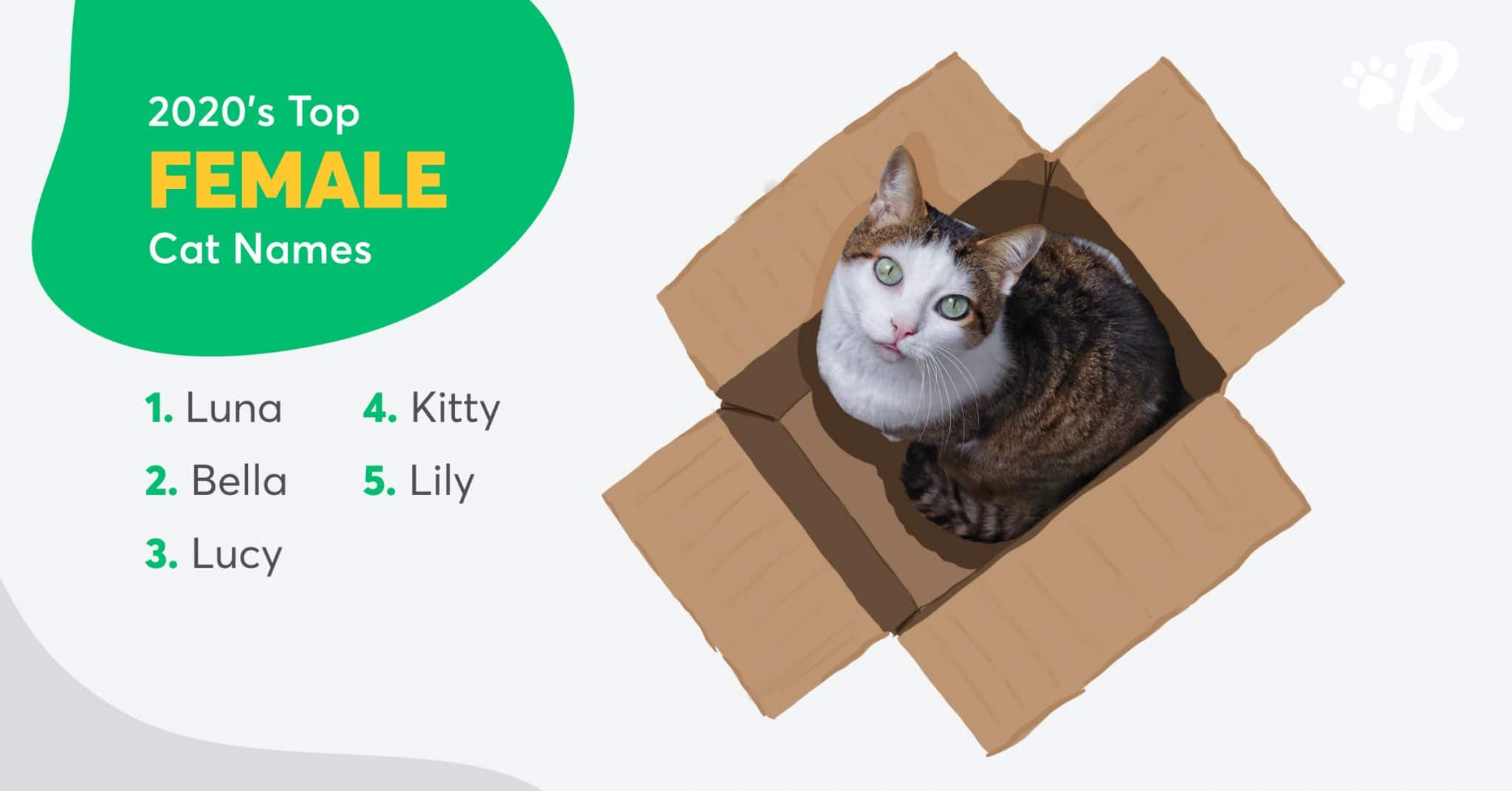 Graphic of the top 5 most popular female cat names: Luna, Bella, Lucy, Kitty and Lily