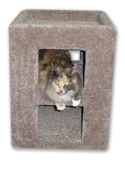 Irene Fat Cat cube