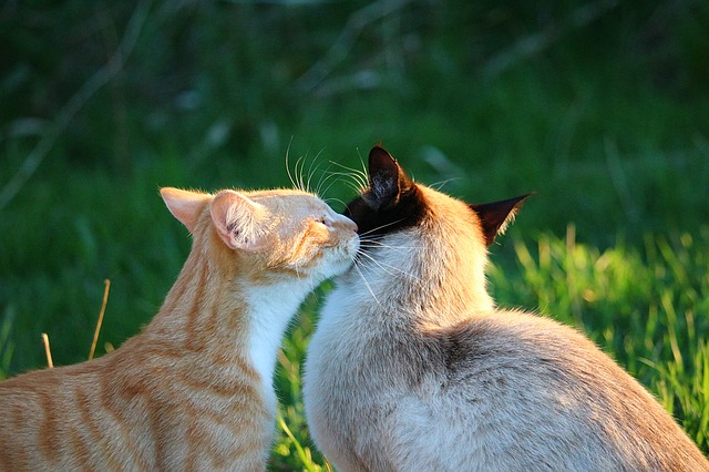 Why Do Cats Like Earwax Gross Or Not Kitty S Ear Fixation Explained