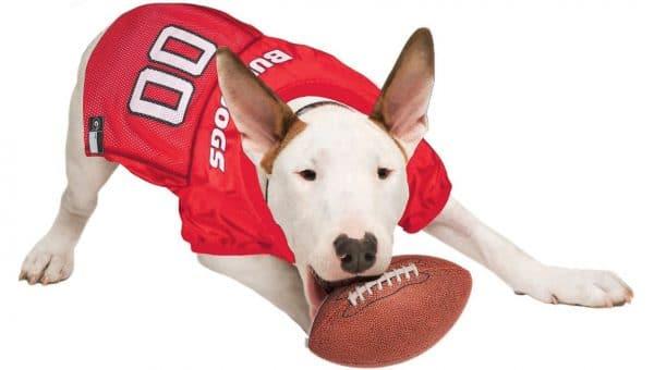 dog wearing red Bulldogs jersey