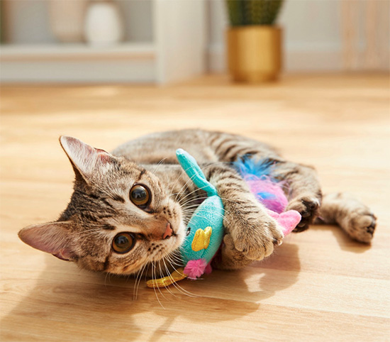 cat playing with indoor cat cat toy