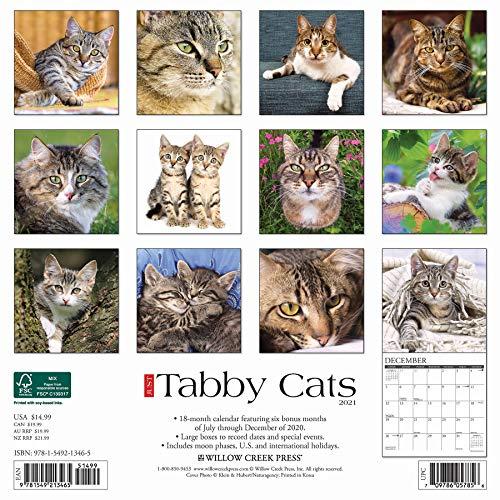 2021 gift calendar for tabby cat lovers