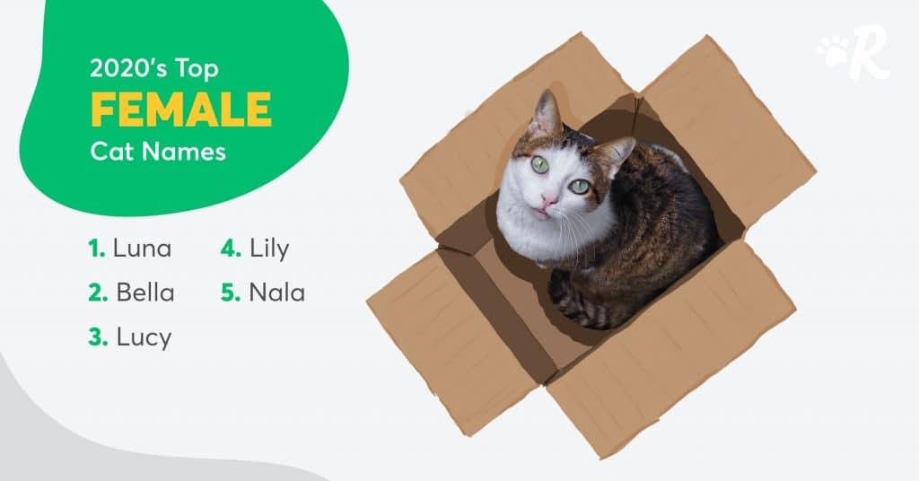 female cat names canada