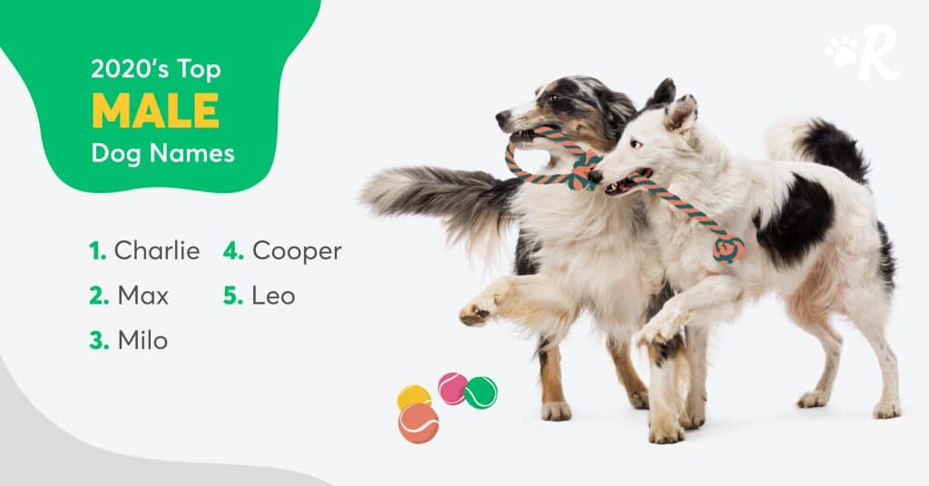 male dog names canada