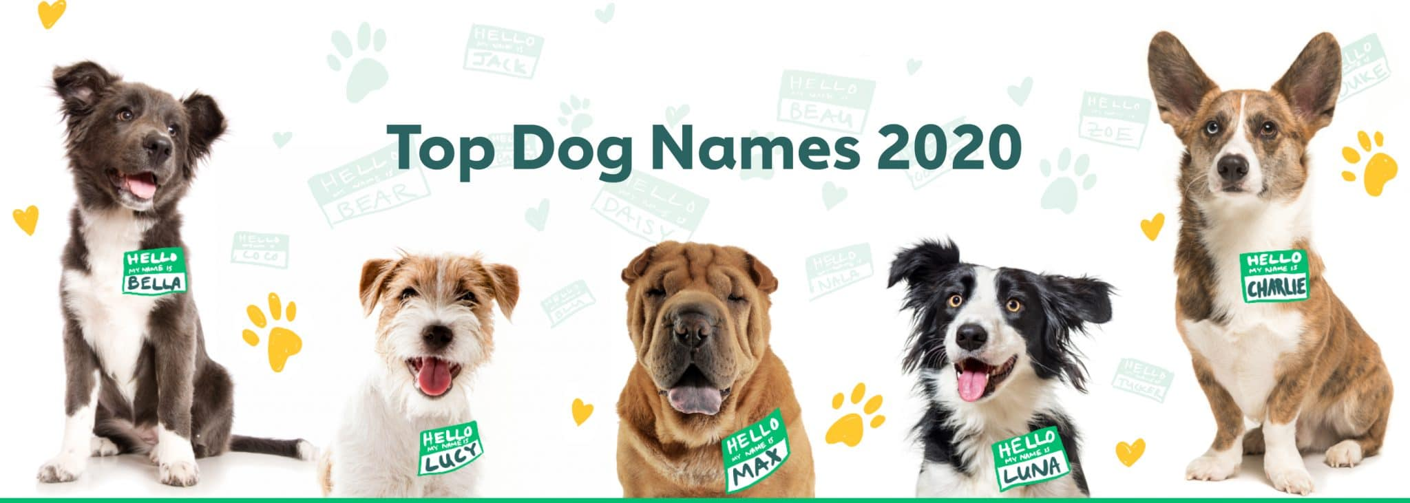 The most popular dog names of 2020 image