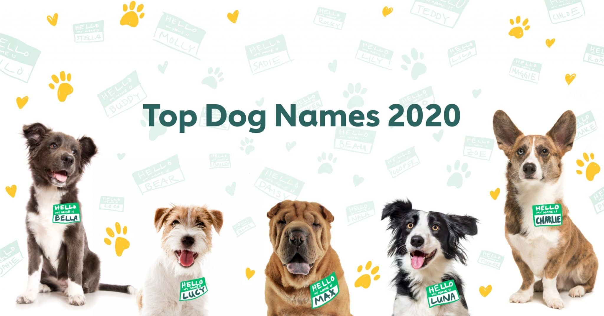 Top 100 Most Popular Dog Names In 2020 Rover Com