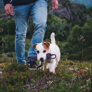 Hurtta Casual Rope reflective dog leash