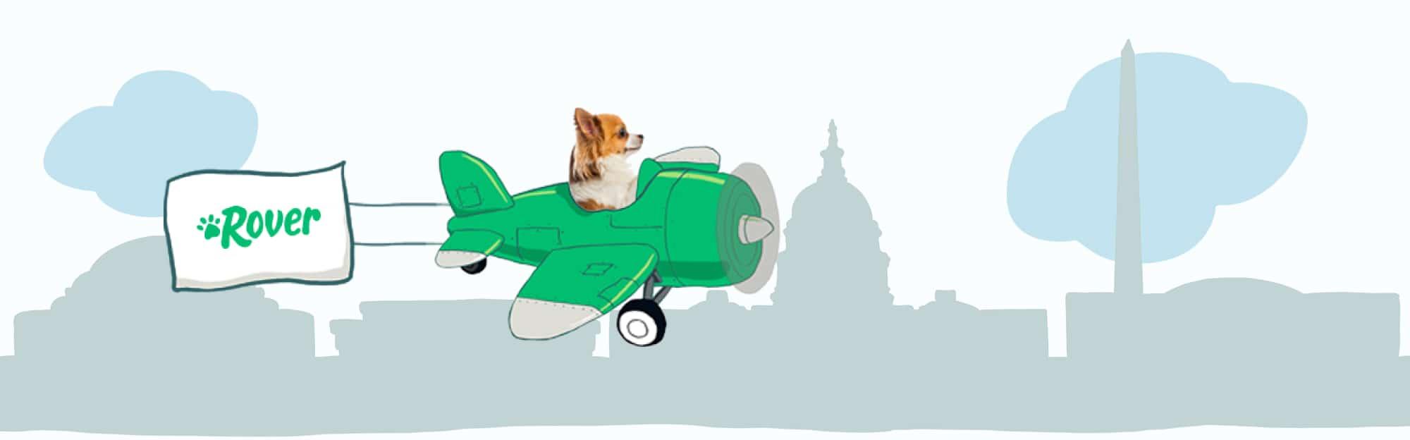 DC's Skyline Pet Names