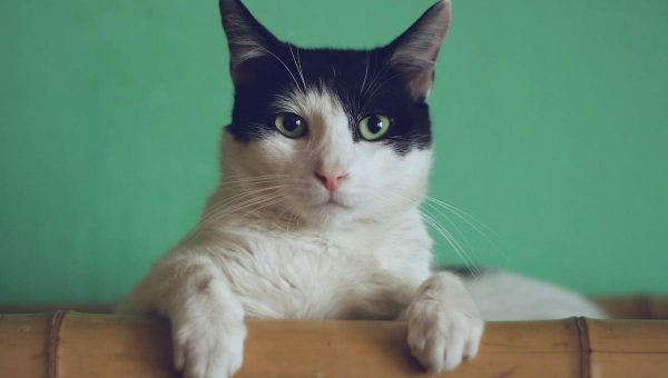 cat on bamboo ledge