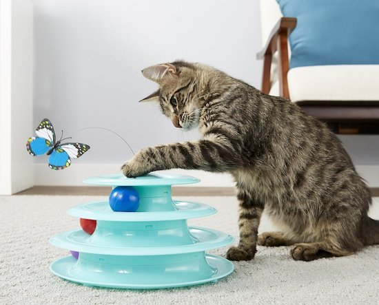 cat playing with Frisco Cat Tracks indoor toy