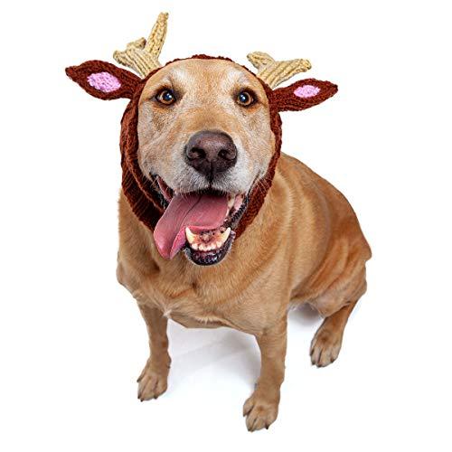 dog wearing Zoo Snoods reindeer winter hat