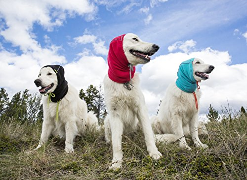 three dogs wearing RC Pet Products Summit winter dog hat