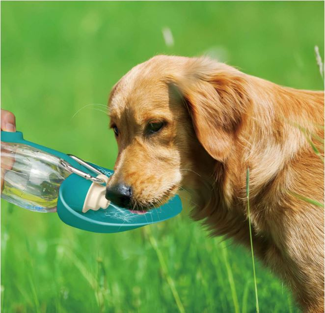 A Dog Drinking From a Water Bottle