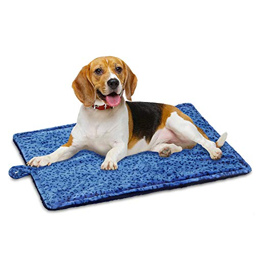 dog on blue Marunda heated dog bed