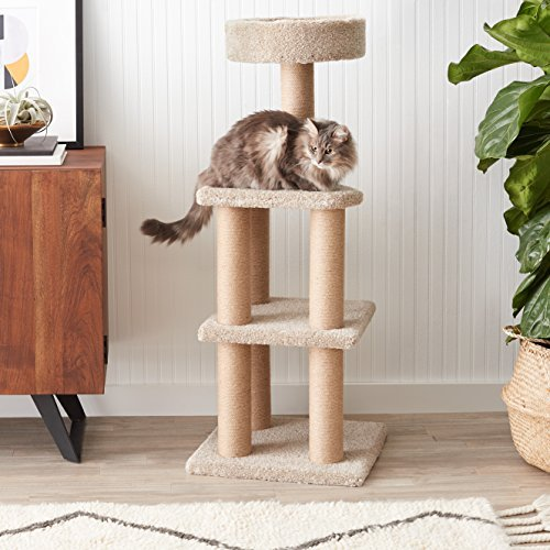 cat on Amazon Basics beige cat tree