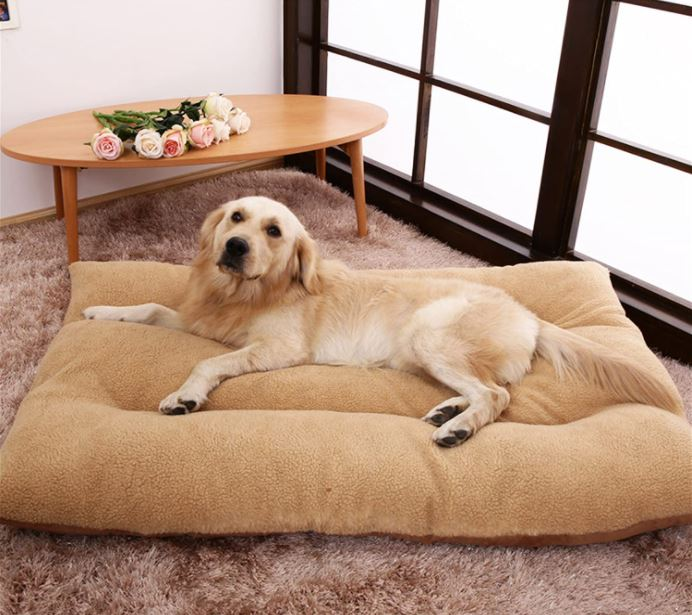 Cheap Dog Bed Pillow in Beige