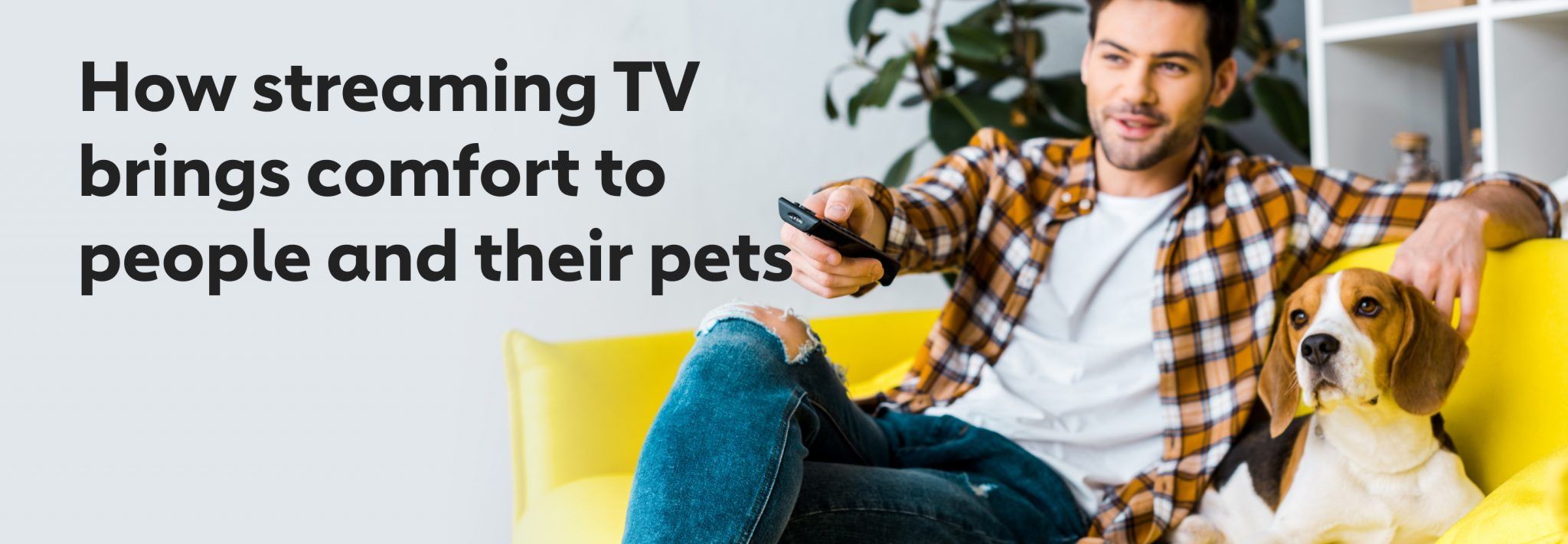 How Streaming TV Brings Comfort to People and Their Pets