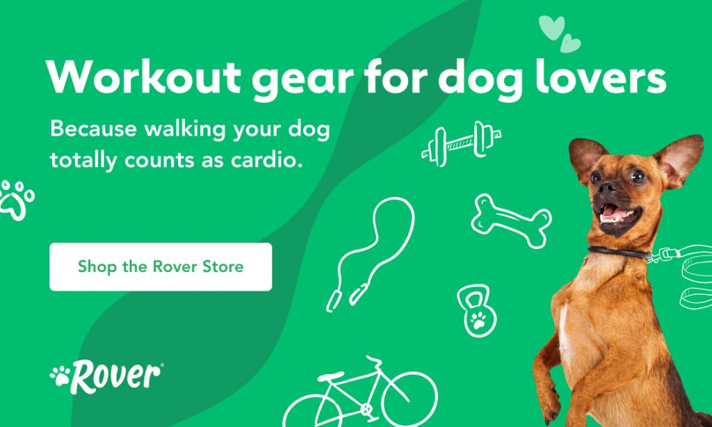A dog on a green background promoting Rover's fitness collection