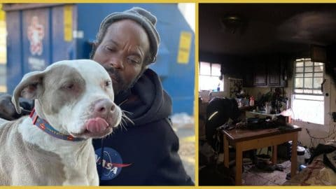 homeless man saves dogs