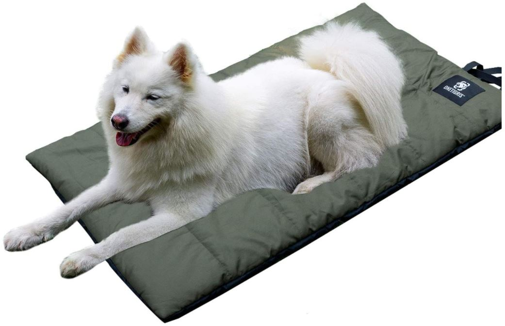 White dog laying down on camping mattress