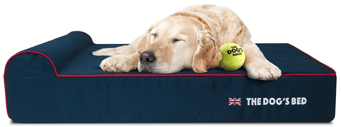 Golden Retriever on memory foam bed
