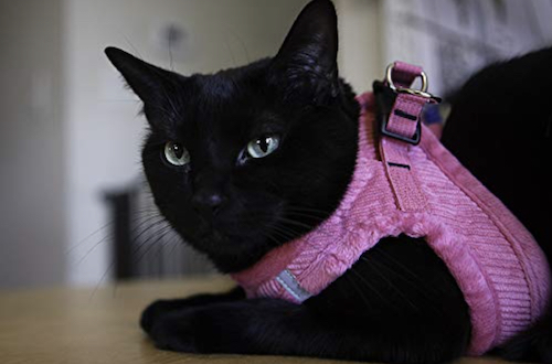 Voyager Soft harness