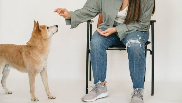 person training dog with treat