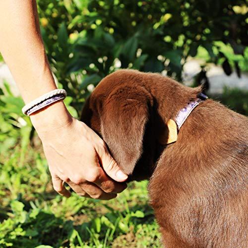 matching dog collar and human bracelet set